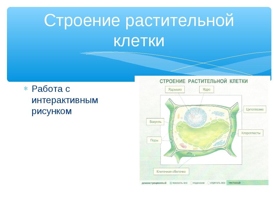 Строение растительной клетки Работа с интерактивным рисунком
