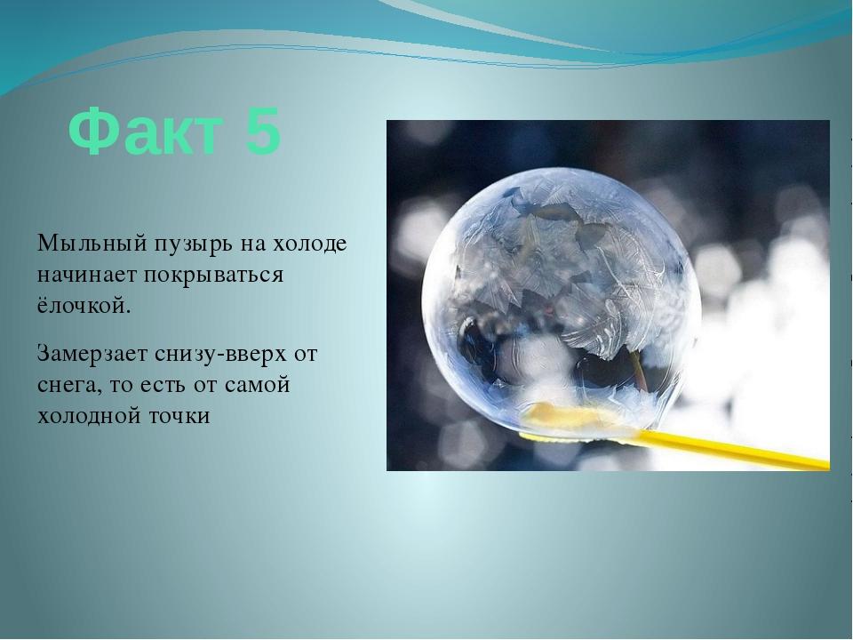 Факт 5 Мыльный пузырь на холоде начинает покрываться ёлочкой. Замерзает снизу...