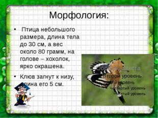 Морфология: Птица небольшого размера, длина тела до 30 см, а вес около 80 гра