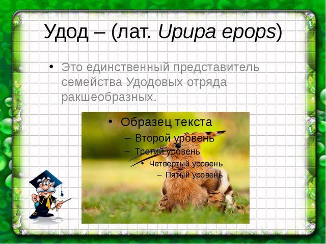 Удод – (лат.Upupa epops) Это единственный представитель семейства Удодовых о...