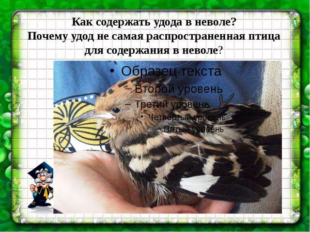 Как содержать удода в неволе? Почему удод не самая распространенная птица для...