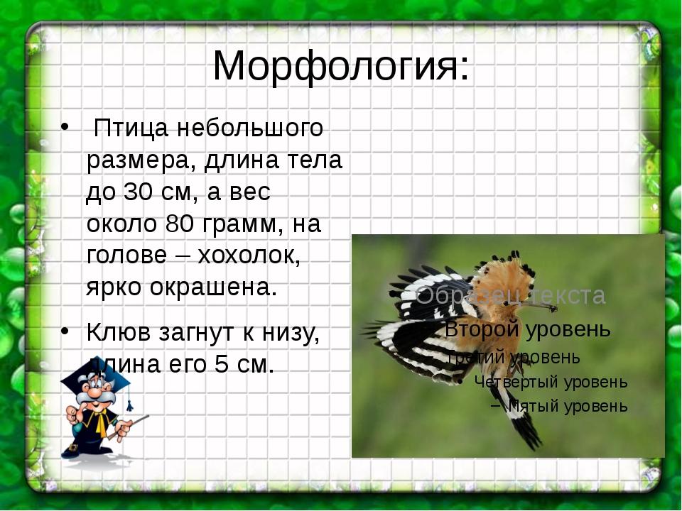 Морфология: Птица небольшого размера, длина тела до 30 см, а вес около 80 гра...