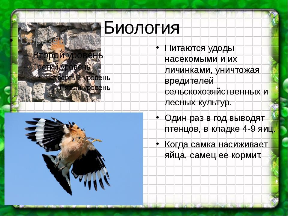 Биология Питаются удоды насекомыми и их личинками, уничтожая вредителей сельс...