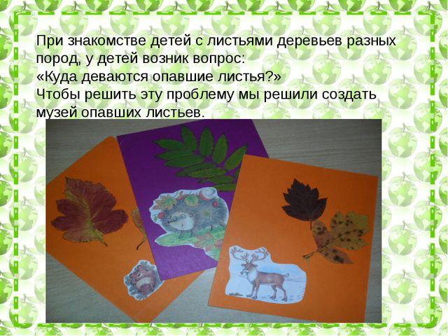 При знакомстве детей с листьями деревьев разных пород, у детей возник вопрос:...