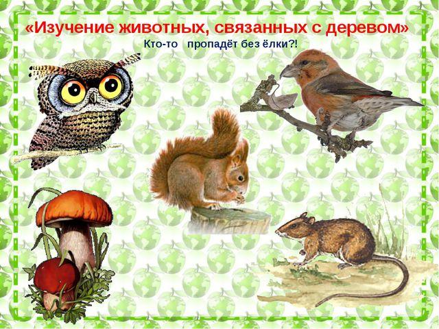 «Изучение животных, связанных с деревом» Кто-то пропадёт без ёлки?!