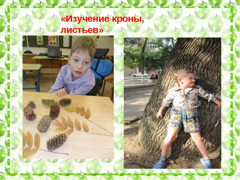 «Изучение кроны, листьев»