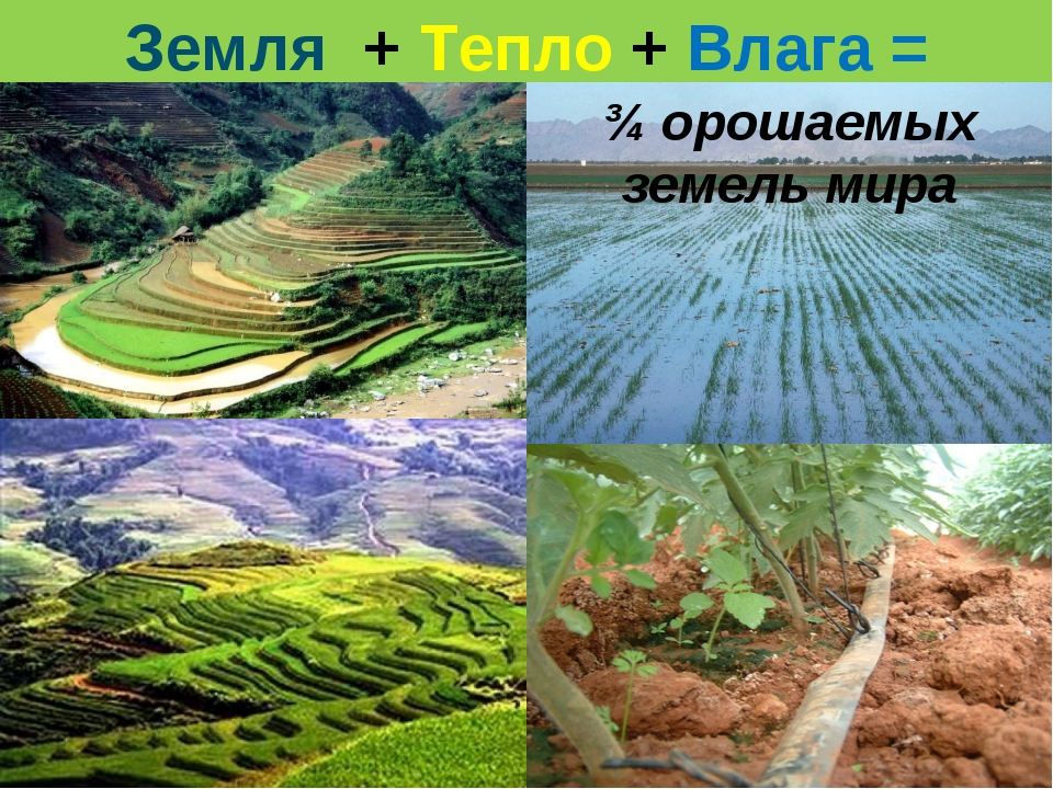 Земля + Тепло + Влага = проблема