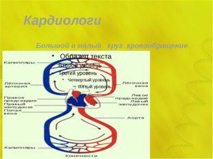 Кардиологи Большой и малый круг кровообращение