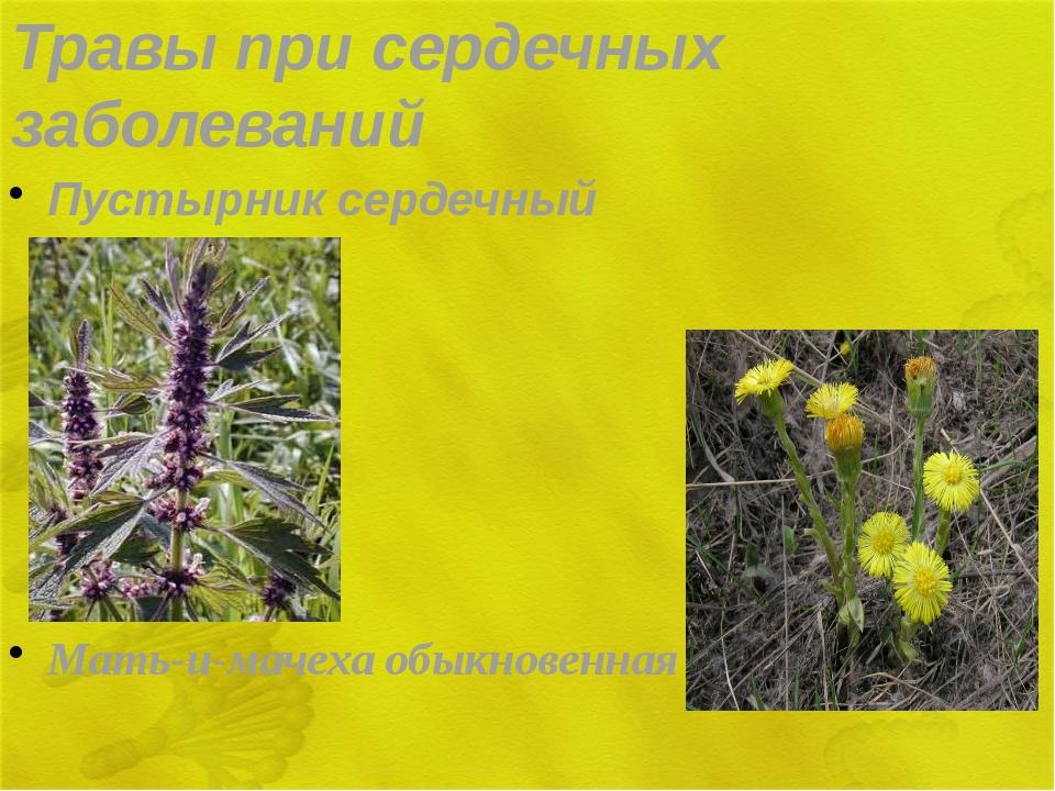 Травы при сердечных заболеваний Пустырник сердечный Мать-и-мачеха обыкновенная