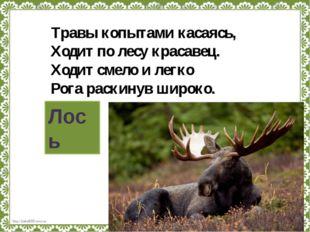 Травы копытами касаясь, Ходит по лесу красавец. Ходит смело и легко Рога раск