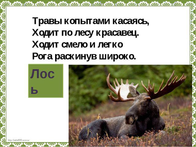 Травы копытами касаясь, Ходит по лесу красавец. Ходит смело и легко Рога раск...