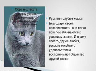 Русские голубые кошки Благодаря своей независимости, они легко приспо-саблива