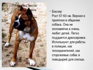 Боксер Рост 57-63 см. Верная и приятная в общении собака. Она не злопамятна и