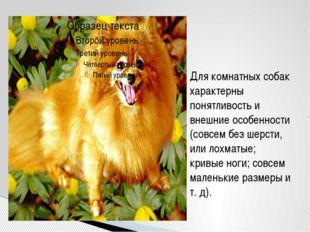 Для комнатных собак характерны понятливость и внешние особенности (совсем без