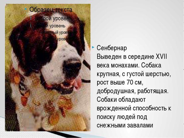 Сенбернар Выведен в середине XVII века монахами. Собака крупная, с густой шер...