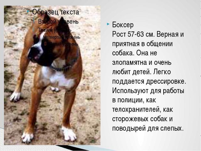 Боксер Рост 57-63 см. Верная и приятная в общении собака. Она не злопамятна и...