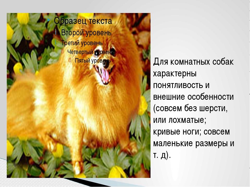 Для комнатных собак характерны понятливость и внешние особенности (совсем без...