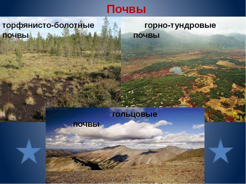 Почвы торфянисто-болотные почвы горно-тундровые почвы гольцовые почвы