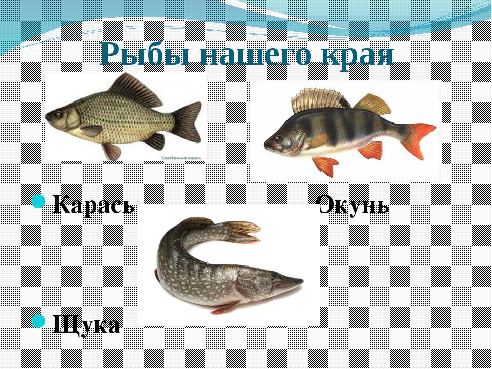 Рыбы нашего края Карась Окунь Щука