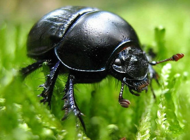 C:\Users\Юлия\Desktop\626596-Os-insetos-comestíveis-mais-consumidos-no-mundo-2.jpg