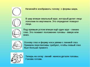 Начинайте изображать голову с формы шара. В шар впиши овальный круг, который