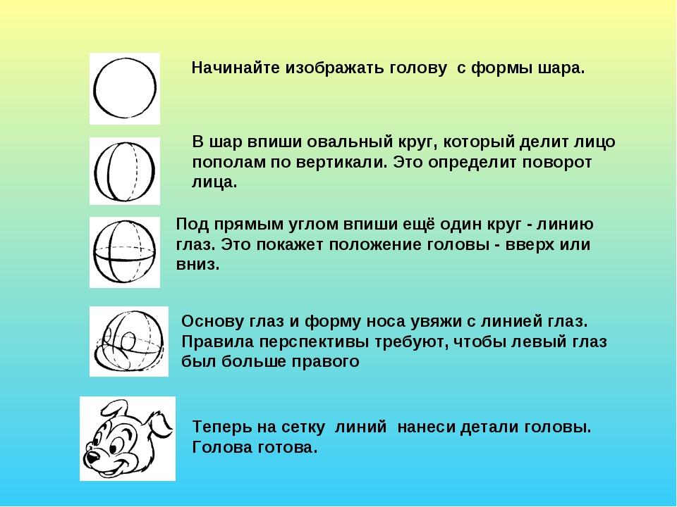 Начинайте изображать голову с формы шара. В шар впиши овальный круг, который...