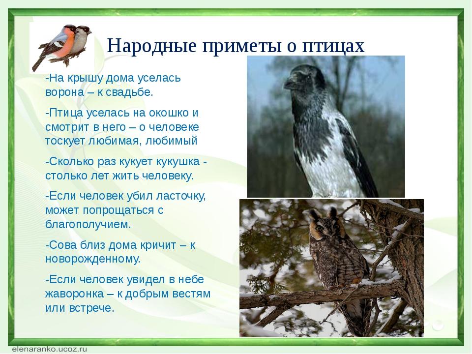 Народные приметы о птицах -На крышу дома уселась ворона – к свадьбе. -Птица у...