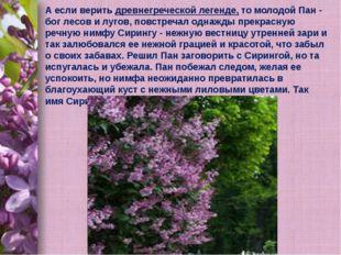 А если верить древнегреческой легенде, то молодой Пан - бог лесов и лугов, по