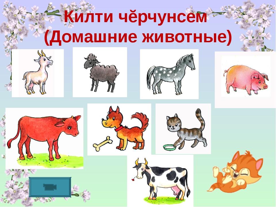 Килти чĕрчунсем (Домашние животные)