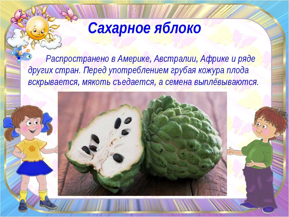 Сахарное яблоко Распространено в Америке, Австралии, Африке и ряде других стр...