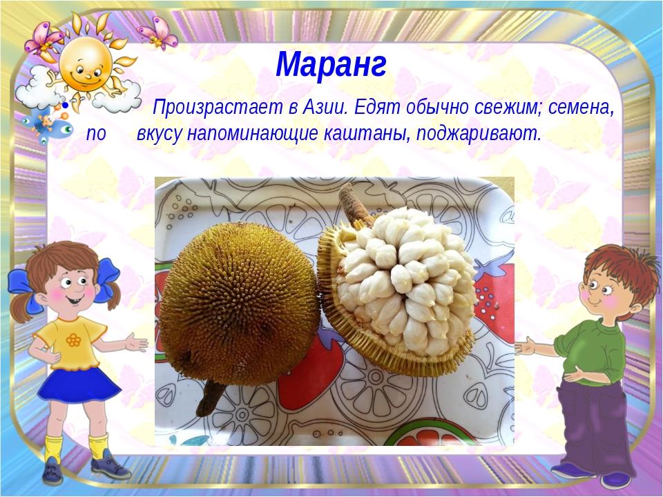 Маранг Произрастает в Азии. Едят обычно свежим; семена, по вкусу напоминающие...