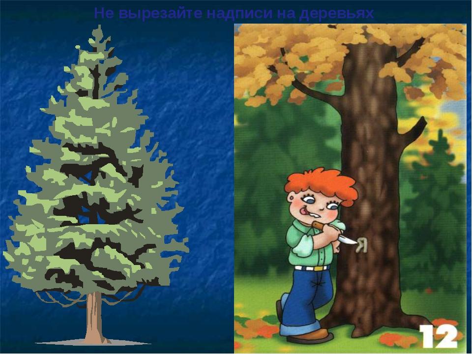 Не вырезайте надписи на деревьях