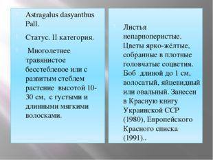 Astragalus dasyanthus Pall. Статус. II категория. Многолетнее травянистое бес