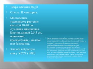 Tulipa schrenkii Regel Статус. II категория. Многолетнее травянистое растение