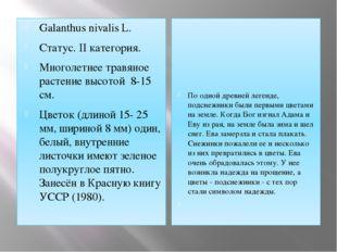 Galanthus nivalis L. Статус. II категория. Многолетнее травяное растение высо