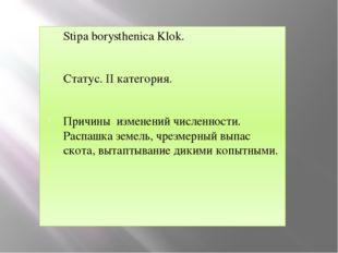 Stipa borysthenica Klok. Статус. II категория. Причины изменений численности.