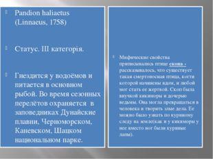Pandion haliaetus (Linnaeus, 1758) Статус. III категорія. Гнездится у водоёмо