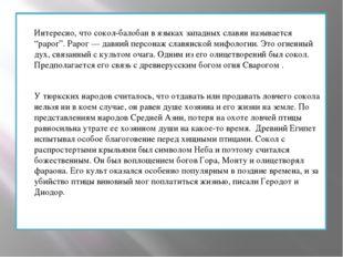 """Интересно, что сокол-балобан в языках западных славян называется """"рарог"""". Рар"""