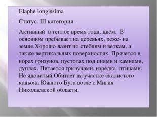 Elaphe longissima Статус. III категория. Активный в теплое время года, днём.
