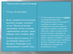 Vipera ursinii renardi Christoph Статус. II категорія. Ведёт дневной способ ж