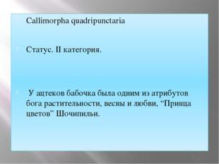Callimorpha quadripunctaria Статус. II категория. У ацтеков бабочка была одни