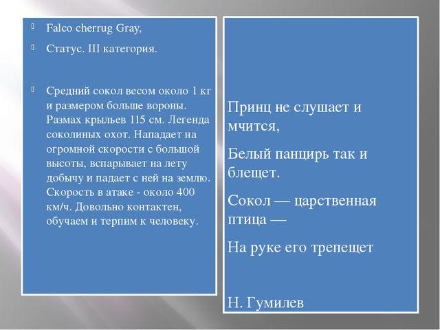 Falco cherrug Gray, Статус. III категория. Средний сокол весом около 1 кг и р...