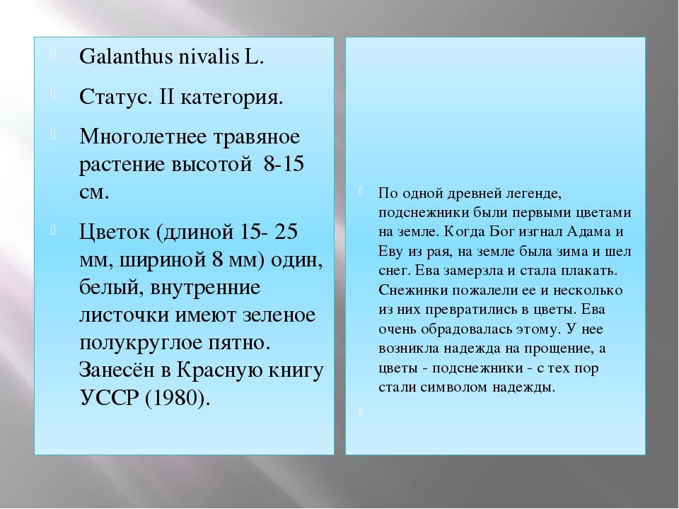 Galanthus nivalis L. Статус. II категория. Многолетнее травяное растение высо...