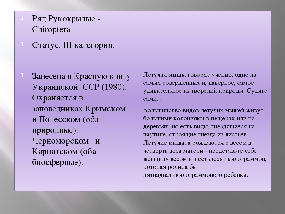 Ряд Рукокрылые - Chiroptera Статус. III категория. Занесена в Красную книгу У...