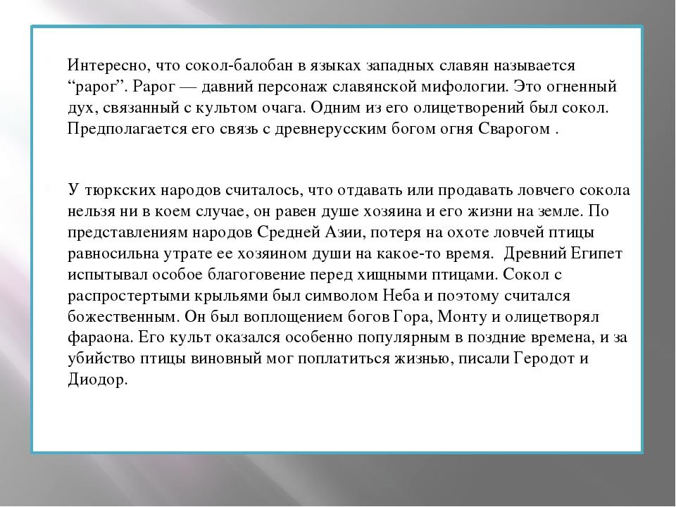 """Интересно, что сокол-балобан в языках западных славян называется """"рарог"""". Рар..."""