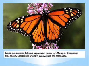 Самая выносливая бабочка мира имеет название «Монарх». Она может преодолеть р