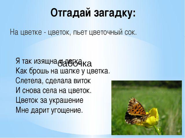 Отгадай загадку: На цветке - цветок, пьет цветочный сок. Ятак изящна илегка...