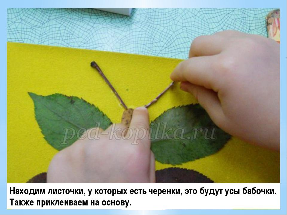 Находим листочки, у которых есть черенки, это будут усы бабочки. Также прикле...