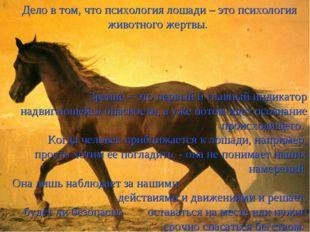 Дело в том, что психология лошади – это психология животного жертвы. Зрение –