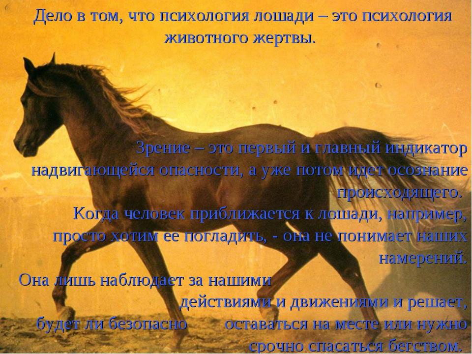 Дело в том, что психология лошади – это психология животного жертвы. Зрение –...